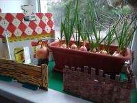 Посадили огород, посмотрите, что растет!